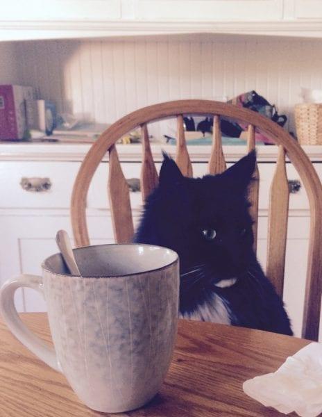 #dailyroutine macska bögre asztalnál