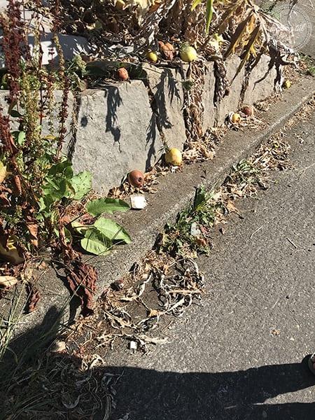 apródolgok-lehullott almák az út szélén