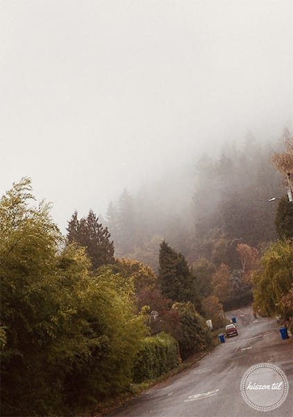 onlinecsend-őszi ködös táj fenyöfákkal