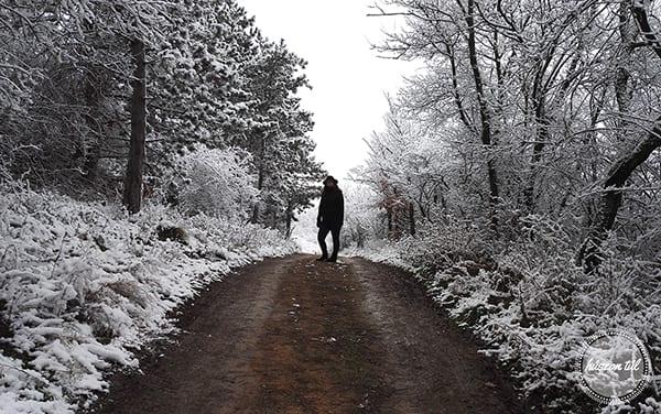 #vágjbele nő a havas erdőben